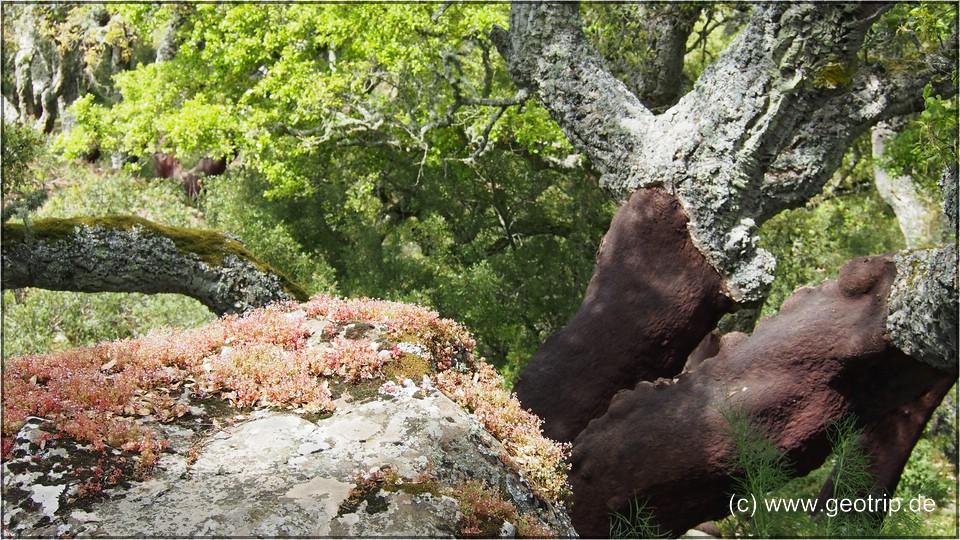 Sardinien_2013reiseberichte_157
