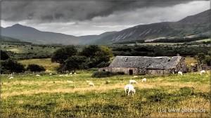 Schottland13_054