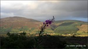 Schottland13_039