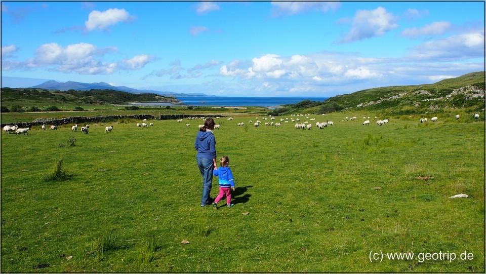 Schottland13_145