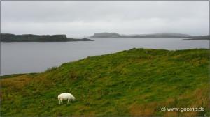 Schottland13_205