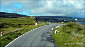 Schottland13_209