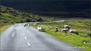 Schottland13_287