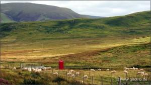 Schottland13_387