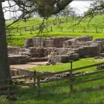 Alte Mauern auf der Schafweide