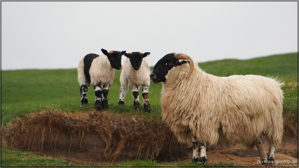 Reisebericht_Wohnmobil_Schottland2014_0252
