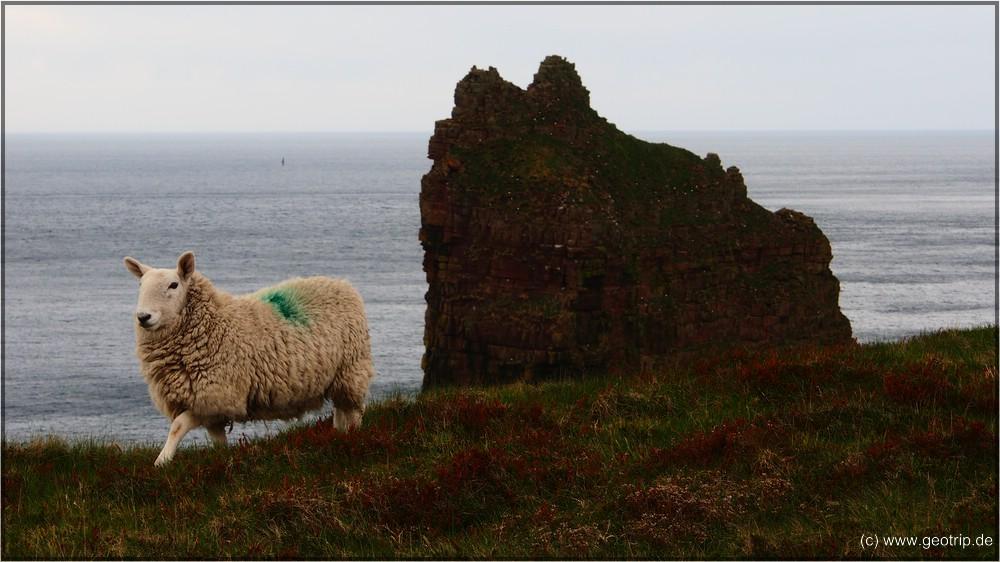 Reisebericht_Wohnmobil_Schottland2014_1855