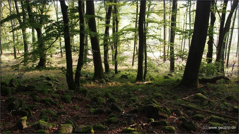 Im deutschen Wald