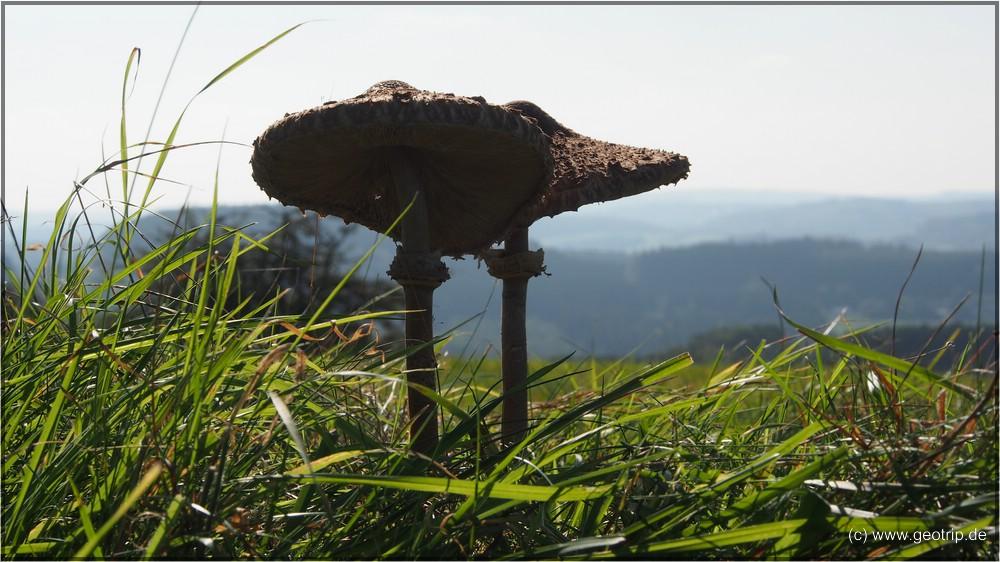 Riesenpilz - 30cm hoch