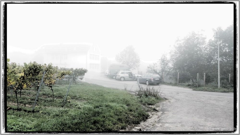 Stellplatz: Kallstadt am Kindergarten, am westlichen Ortsrand, Blick in die Weinberge o