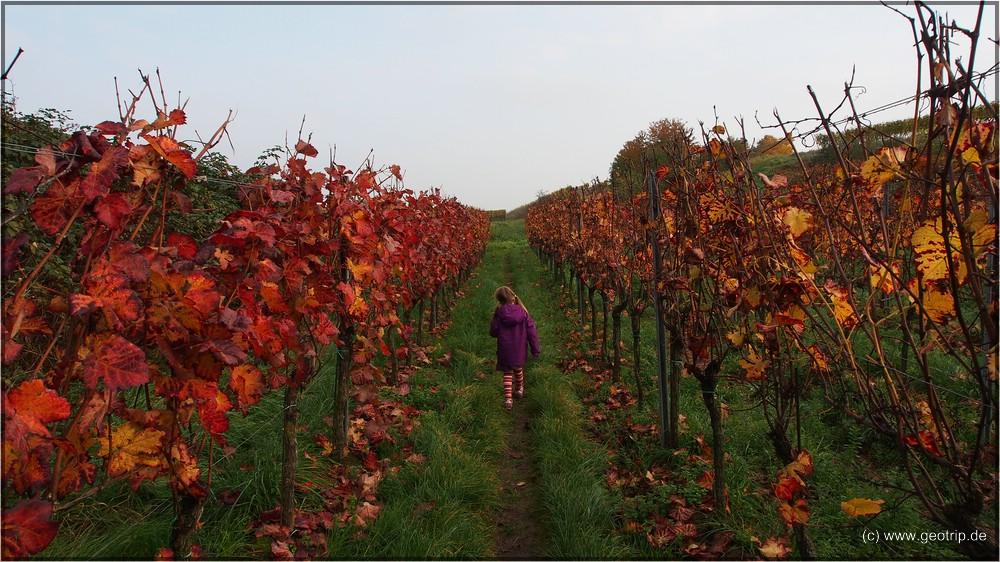 Man wähnt sich im Burgund