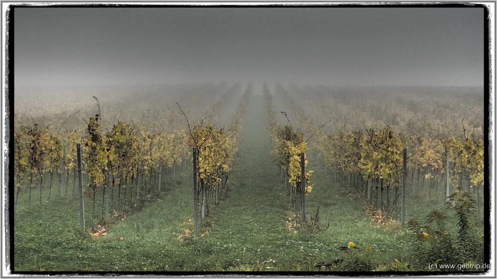 Womo_Pfalz16