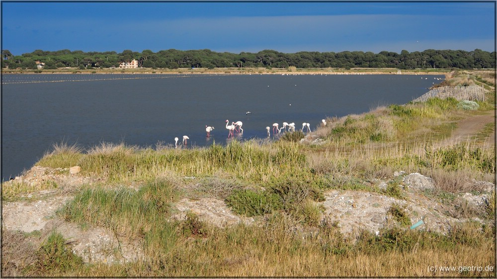 Flamingos -sogar leicht rosa
