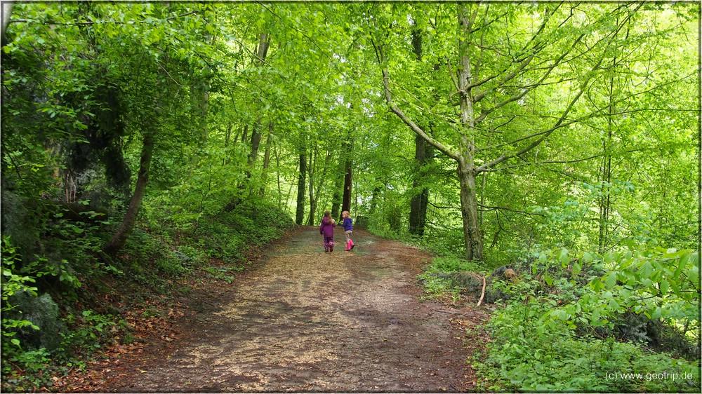 Grün leuchtet der Wald auf dem Weg nach unten