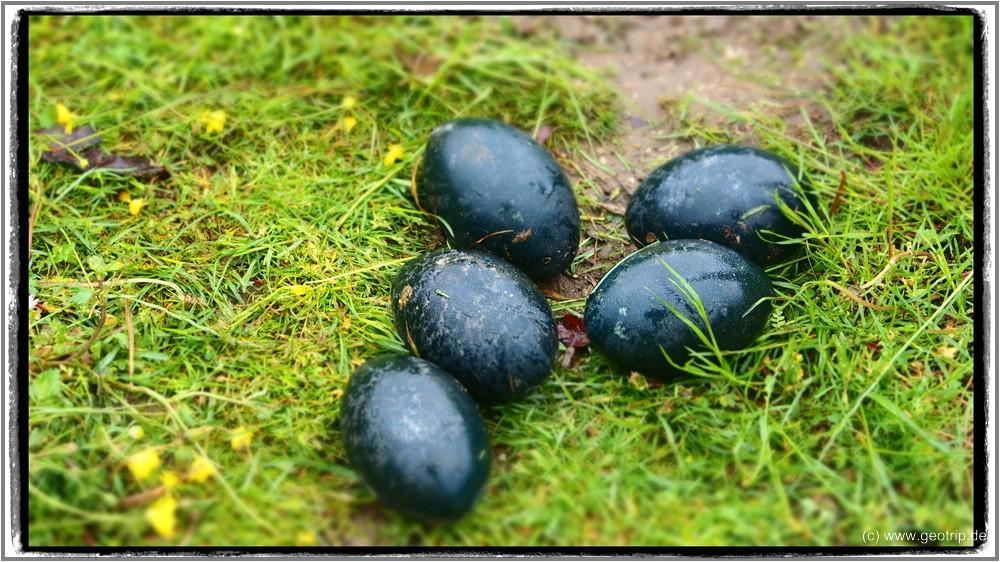 Die Eier auf der Wiese