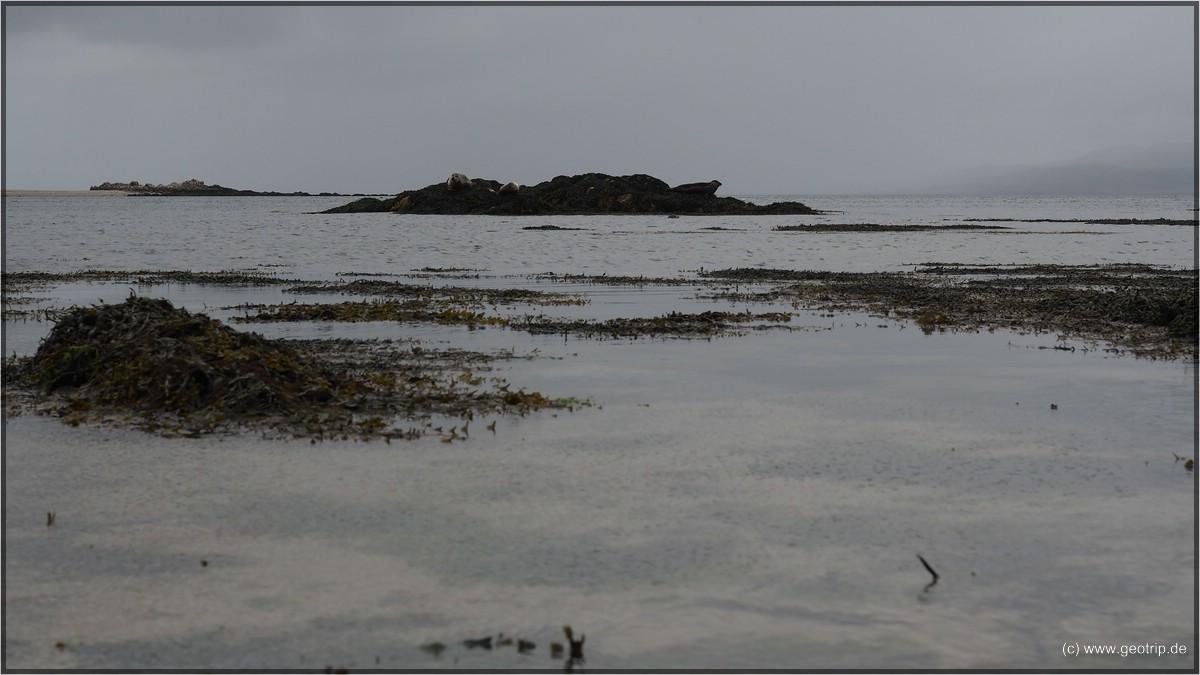 Tele vergessen- die grauen Umrisse sind Seehunde