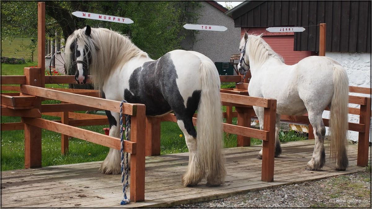 DAS sollen Ponies sein?