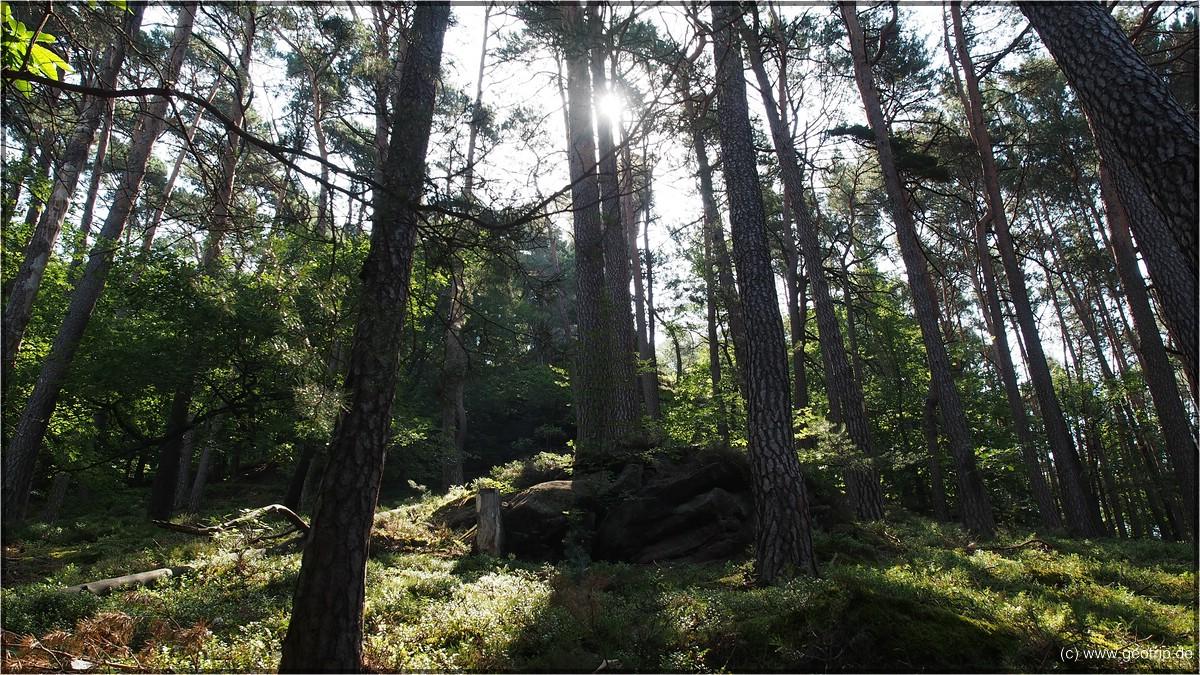 Die Sonne brennt - selbst im Wald