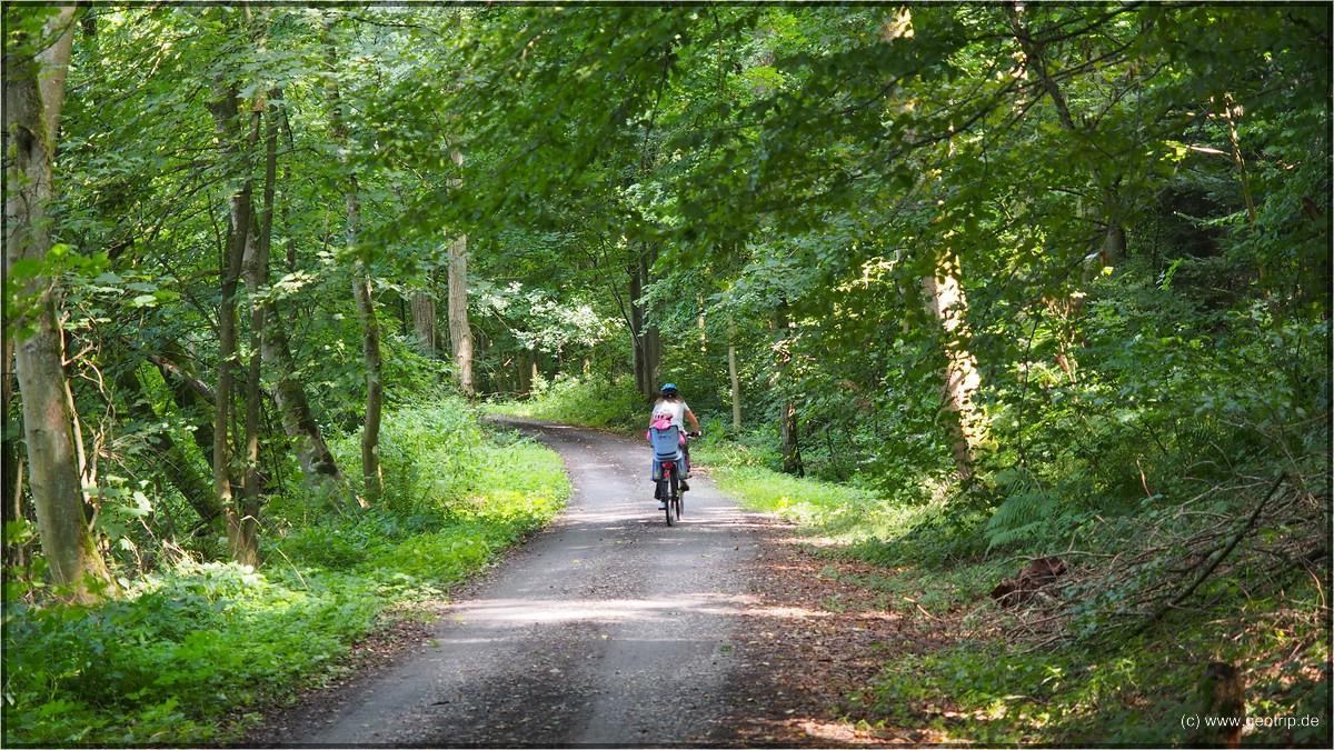 Am unteren Neckar führt der Weg oft durch den Wald