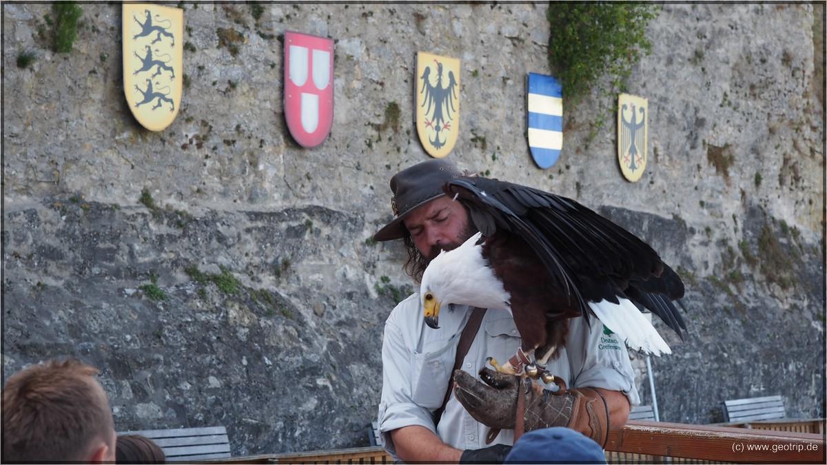 Falkner mit Seeadler