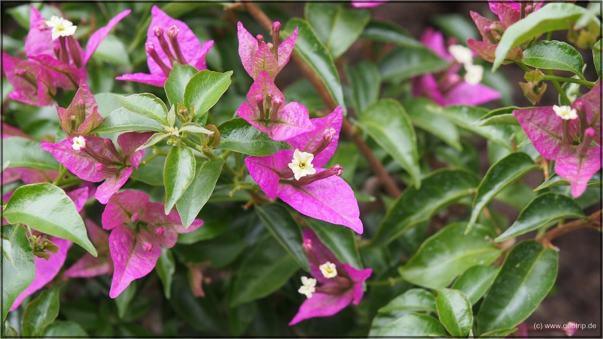 mit interessanten Blüten