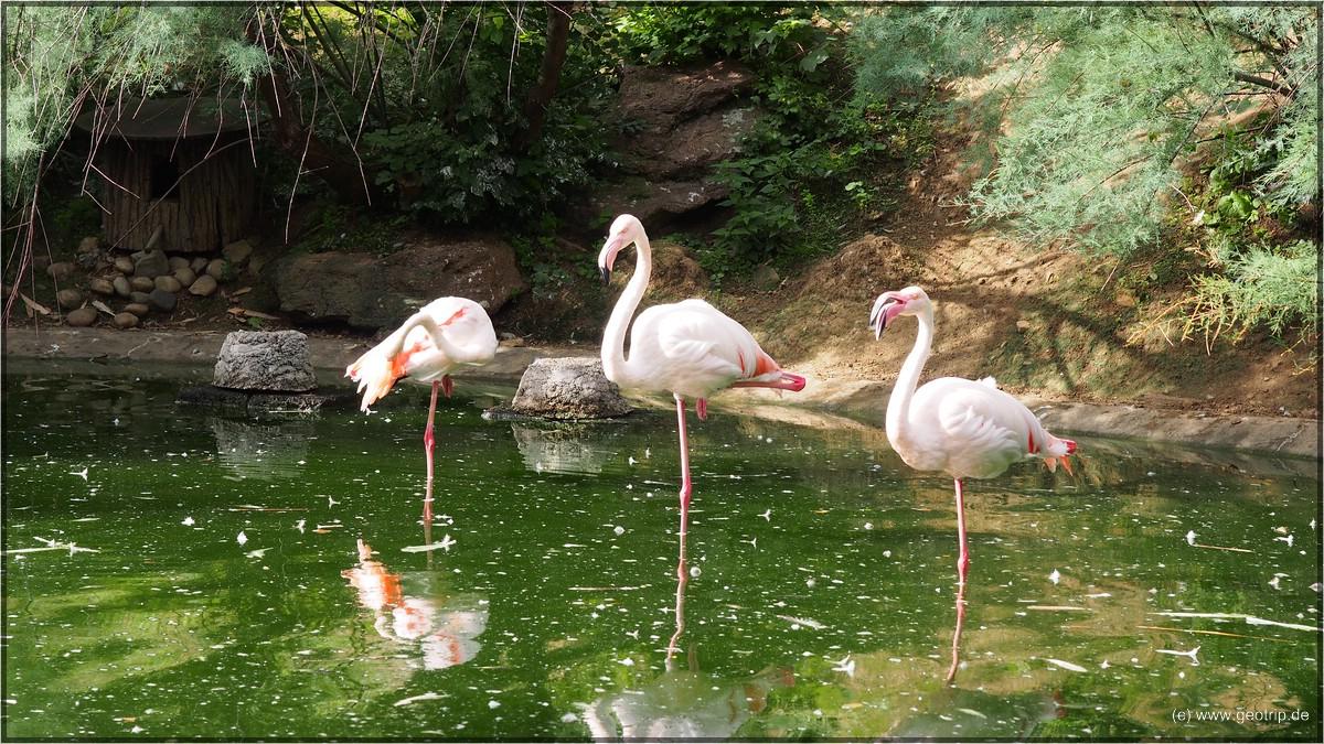 Die Flamingos im sardischen Garten