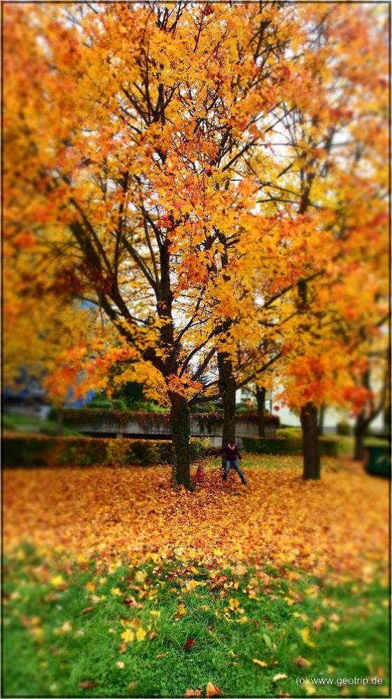 jaa - Herbst!