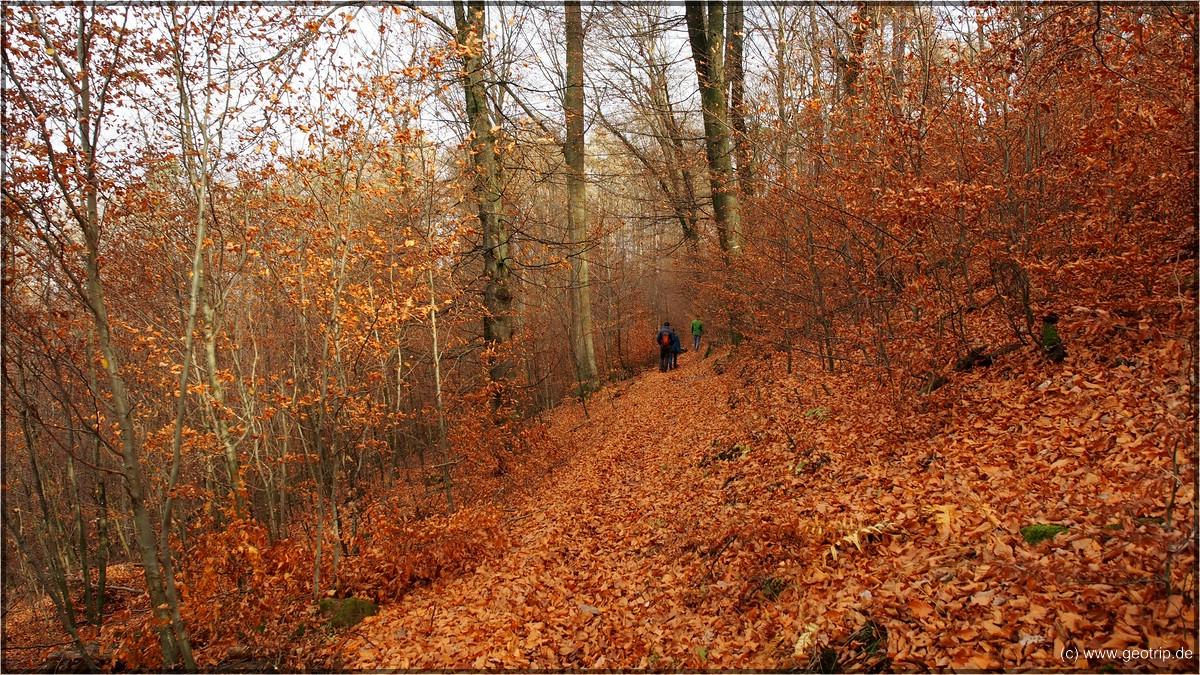 Auf dem Walderlebnispfad