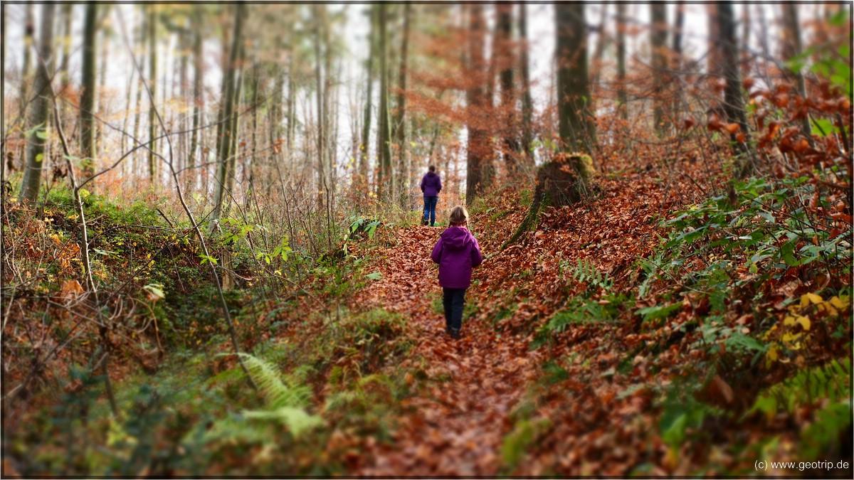 Netter Wald