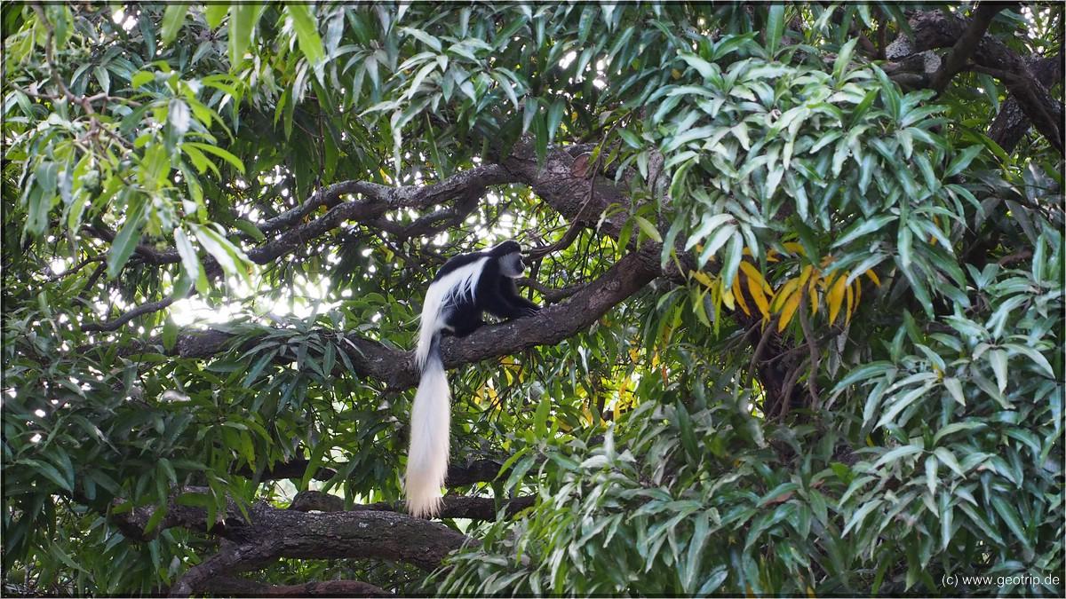 Schön anzusehen mit dem buschigen Schwanz