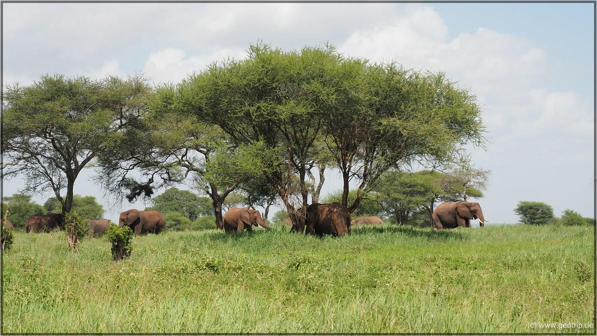 Hatten wir schon Elefanten?