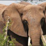 Es geht los mit der Safari – und auch gleich mit dem Abenteuer