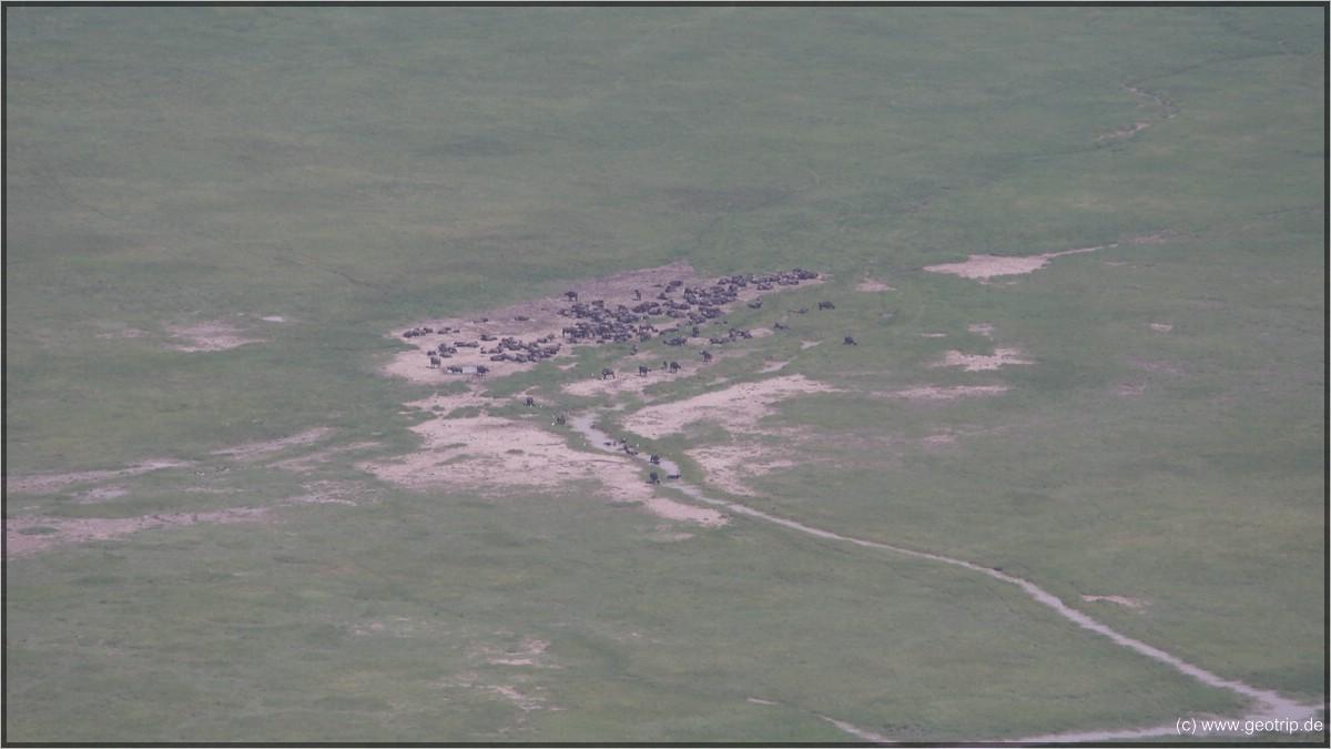Die schwarzen kleinen Punkte entpuppen sich als Tiere - hier Büffel