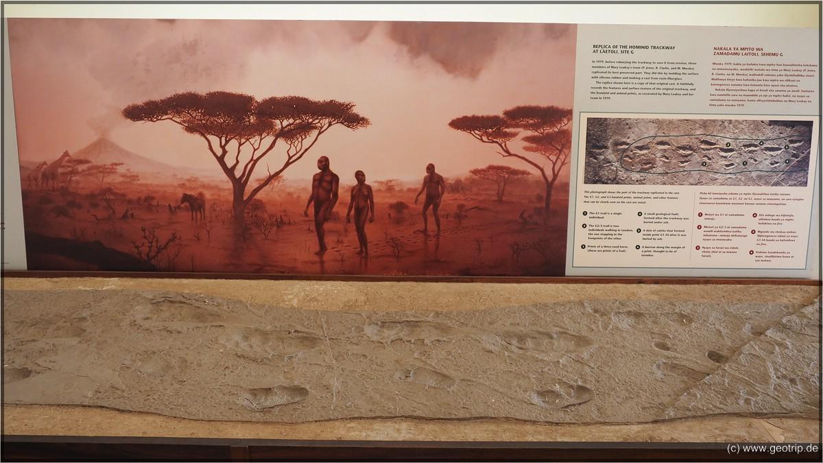 Die Fußspuren von Laetoli. 3,6 Millionen Jahre alt!