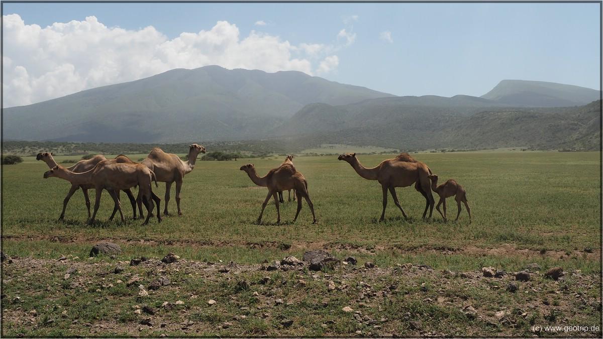 WIr verlassen den Nationalpark. Gleich tauchen wieder Masai auf