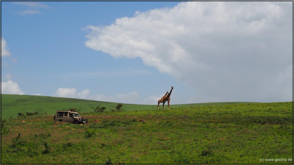 Abschied von den Giraffen