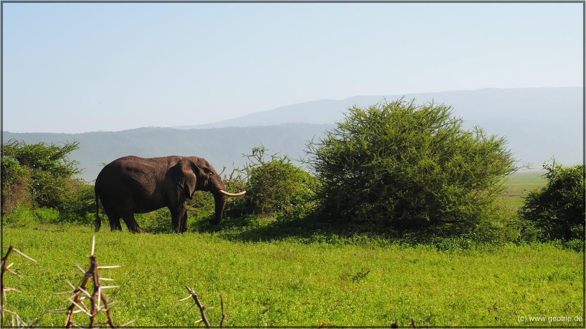 Am Wegesrand: Elefant