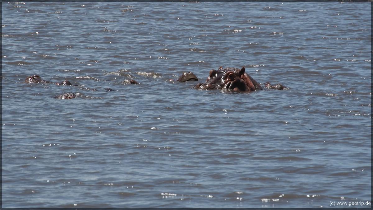 WIr essen drin, immerhin mit Aussicht auf Hippos