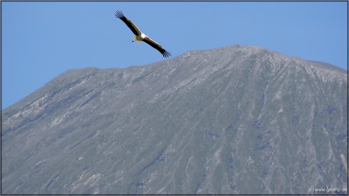 Storch - ein echter Vielflieger