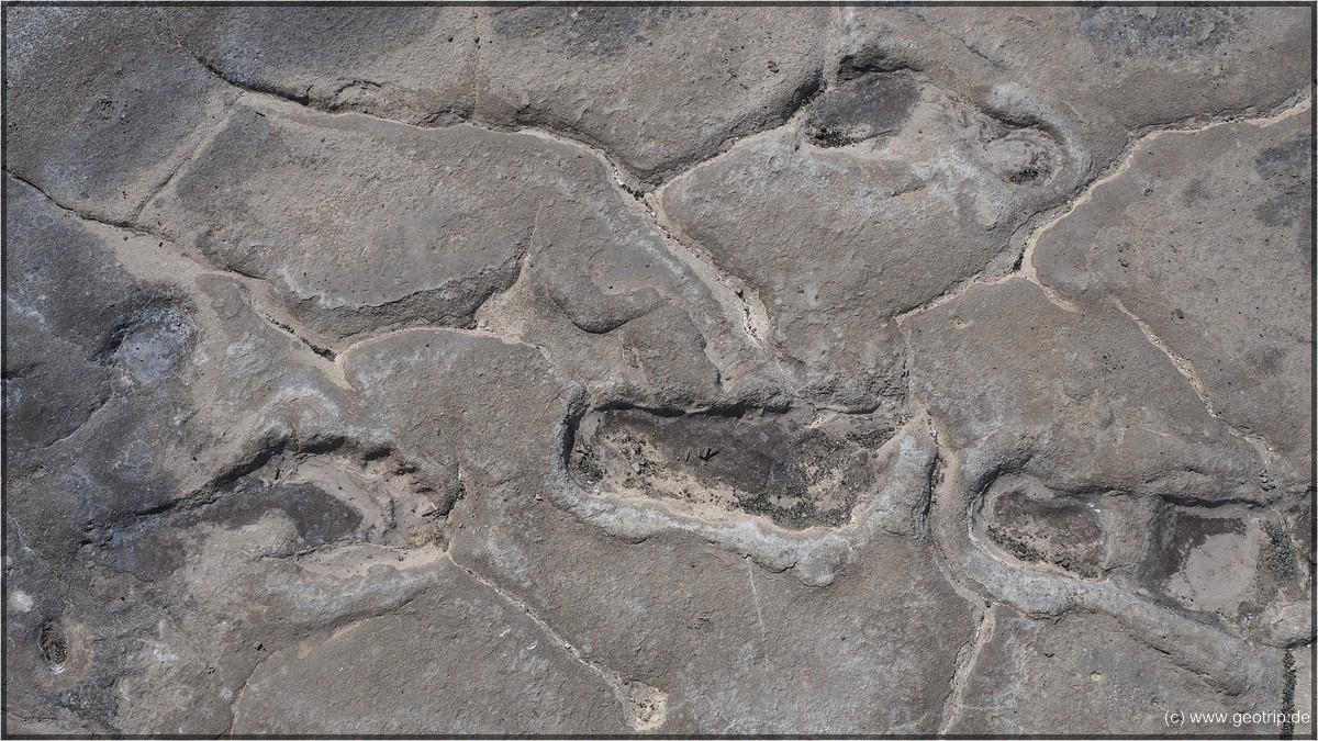 120000 Jahre alte Fußspuren!