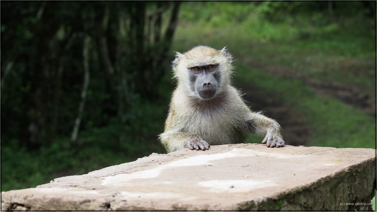 Jede Menge Affen da!