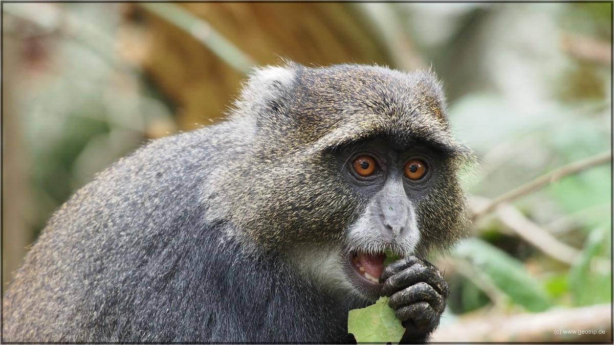 Tonnenweise Affen