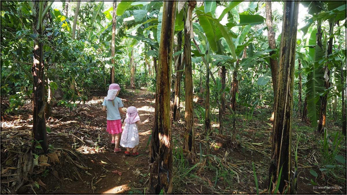 durch Bananenanpflanzungen