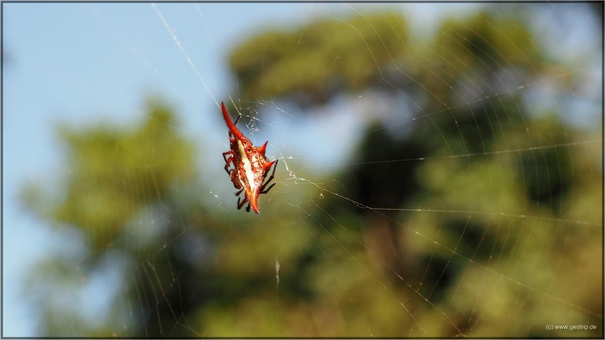 Da sit doch mal ne hässliche Spinne - leider Name vergessen