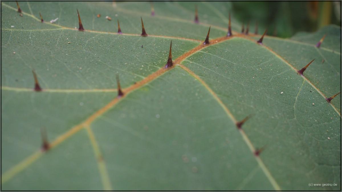 Interessante Pflanzen sehen wir