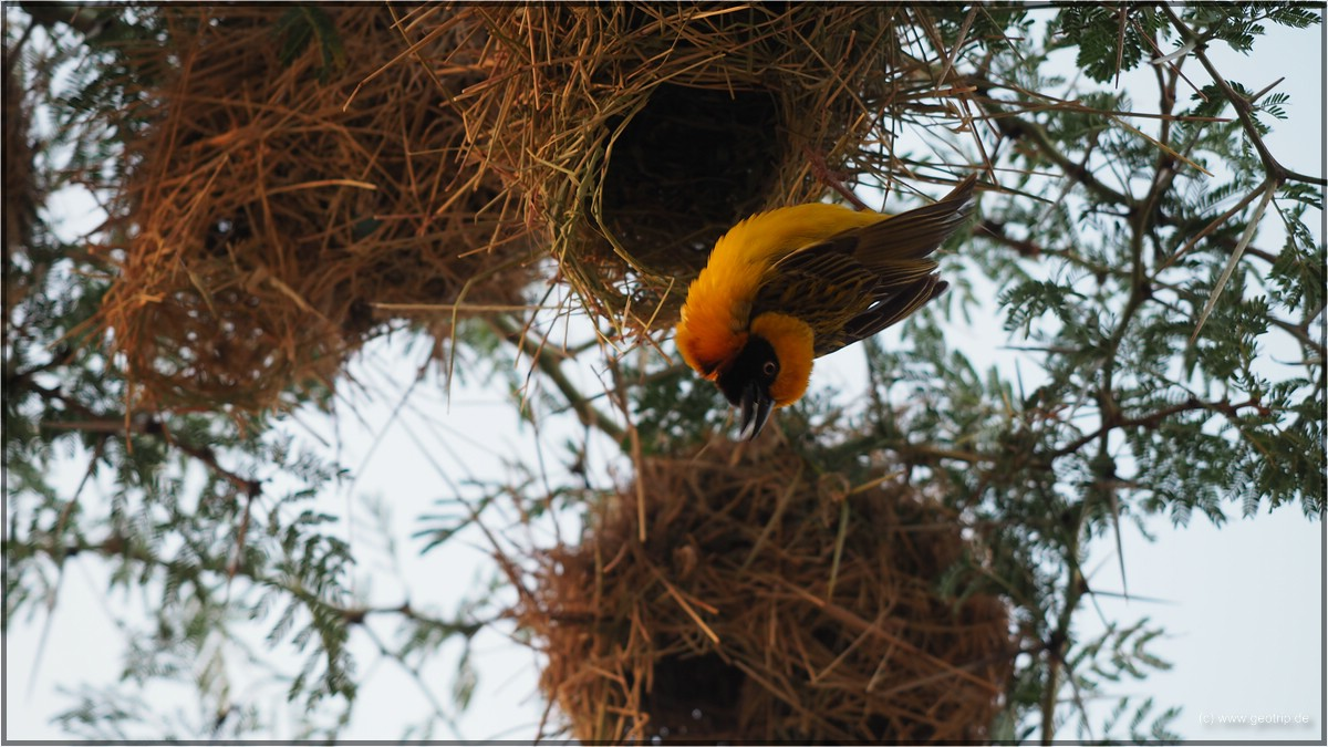 DIe Vögel erwachen