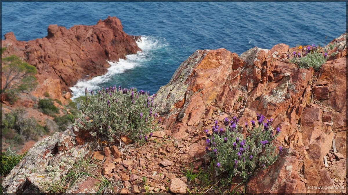 und blühender Lavendel