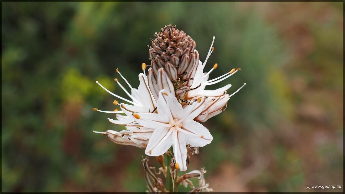mit schönen Blumen am Wegesrand - mal wieder keinen Schimmer