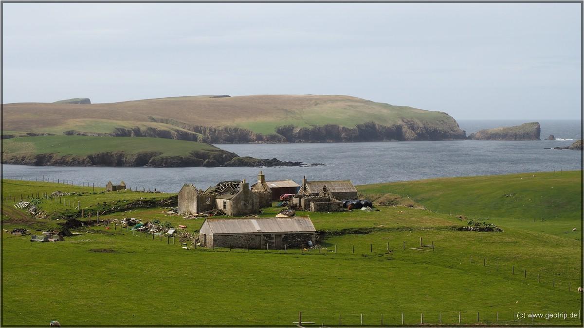 Shetlands