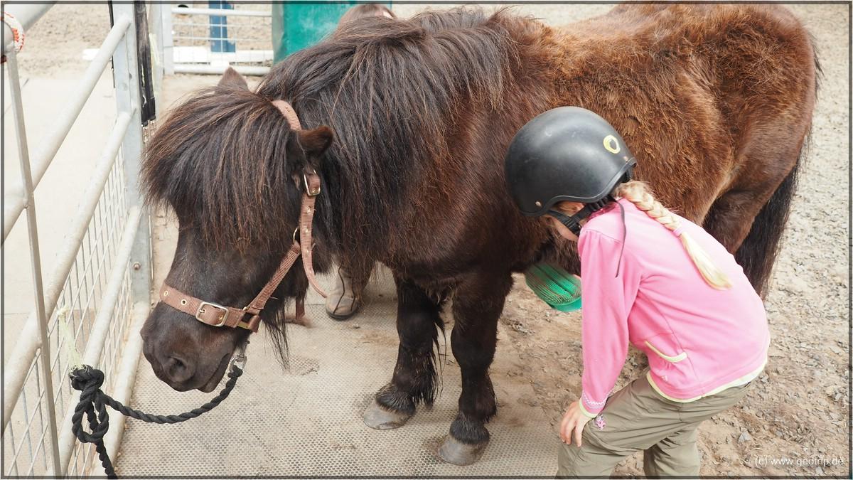Es geht los: Pony striegeln
